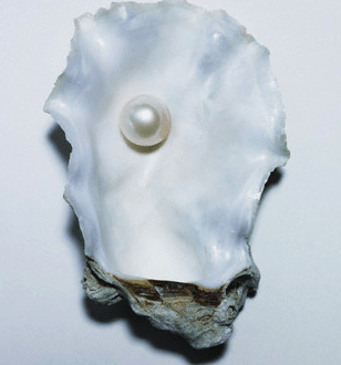 pearl and shell Pearls - History and Beauty - EAT LOVE SAVOR International luxury lifestyle magazine, bookazines & luxury community