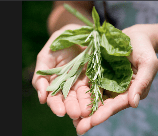 fresh herbs Rediscover Growing Your Own Herbs - EAT LOVE SAVOR International luxury lifestyle magazine and bookazines