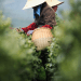 picking tea Where Does Tea Come From? - EAT LOVE SAVOR International luxury lifestyle magazine and bookazines
