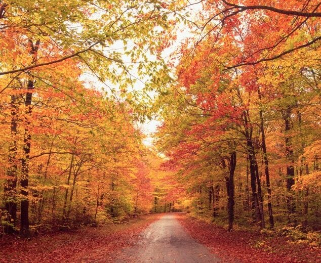 fall colors on a dirt path