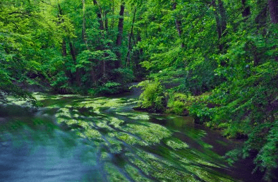 River in beech forest Bavaria Germany Reconnect with Nature: Tranquil River Beech Forest - EAT LOVE SAVOR International Luxury Lifestyle Magazine