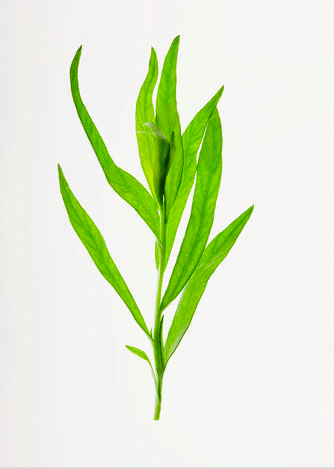 fresh tarragon Discover: Tarragon - EAT LOVE SAVOR International luxury lifestyle magazine, bookazines & luxury community