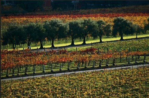 fall orchard Discover: A Bountiful Fall Harvest ~ The Outdoors & Gourmet Delights - EAT LOVE SAVOR International luxury lifestyle magazine and bookazines