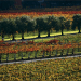 fall orchard Discover: A Bountiful Fall Harvest ~ The Outdoors & Gourmet Delights - EAT LOVE SAVOR International luxury lifestyle magazine, bookazines & luxury community