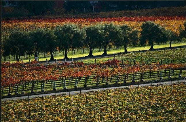 fall orchard Discover: A Bountiful Fall Harvest ~ The Outdoors & Gourmet Delights - EAT LOVE SAVOR International Luxury Lifestyle Magazine