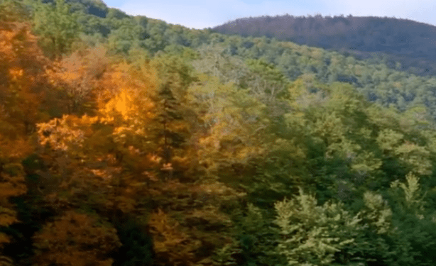 nature transforms Reconnect with Nature: The Beauty of the Seasons: Fall - EAT LOVE SAVOR International luxury lifestyle magazine, bookazines & luxury community