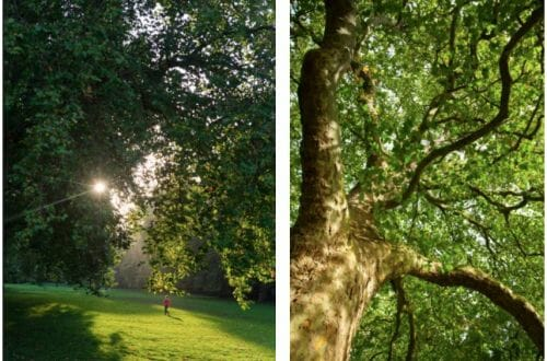 hyde park trees Reconnect with Nature: Hyde Park in Summertime - EAT LOVE SAVOR International luxury lifestyle magazine and bookazines
