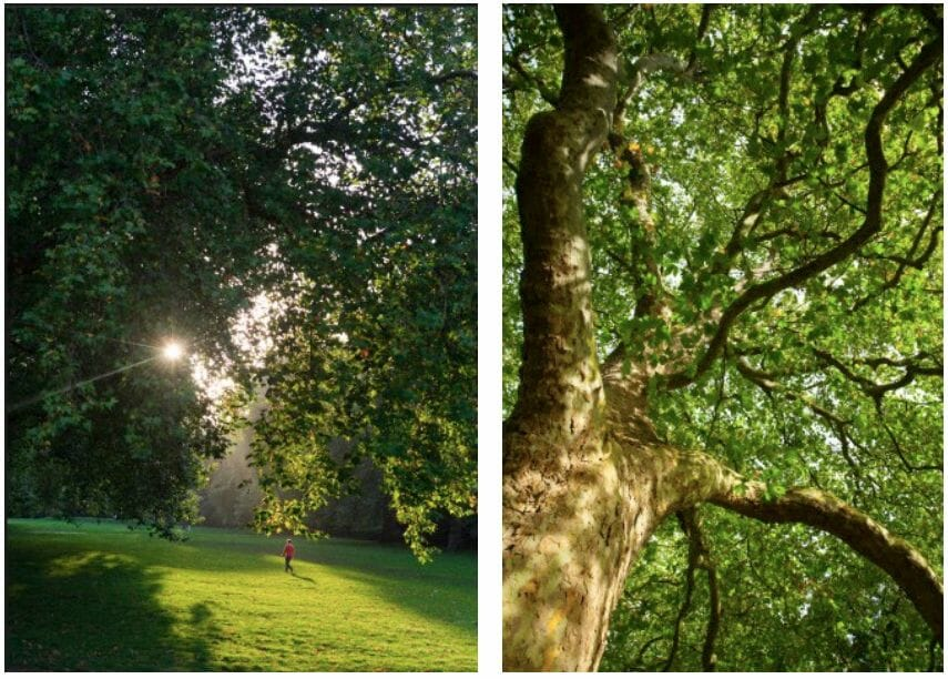 hyde park trees Reconnect with Nature: Hyde Park in Summertime - EAT LOVE SAVOR International Luxury Lifestyle Magazine