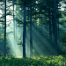 nature sounds Reconnect With Nature: Forest and Nature Sounds [video] - EAT LOVE SAVOR International Luxury Lifestyle Magazine