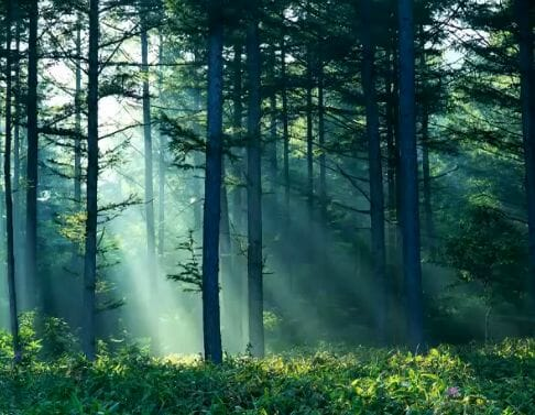 nature sounds Reconnect With Nature: Forest and Nature Sounds [video] - EAT LOVE SAVOR International luxury lifestyle magazine and bookazines