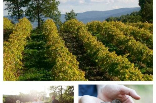 les pastras Experience Provence on a Fine Food Truffle Farm for a Sensory Experience! - EAT LOVE SAVOR International luxury lifestyle magazine, bookazines & luxury community