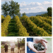 les pastras Experience Provence on a Fine Food Truffle Farm for a Sensory Experience! - EAT LOVE SAVOR International Luxury Lifestyle Magazine