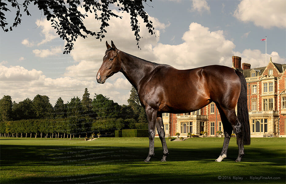 Equine Art by the fine art photographer and artist, Ripley. Specialising in large-scale portraiture of thoroughbred racehorses for owners, breeders and trainers.