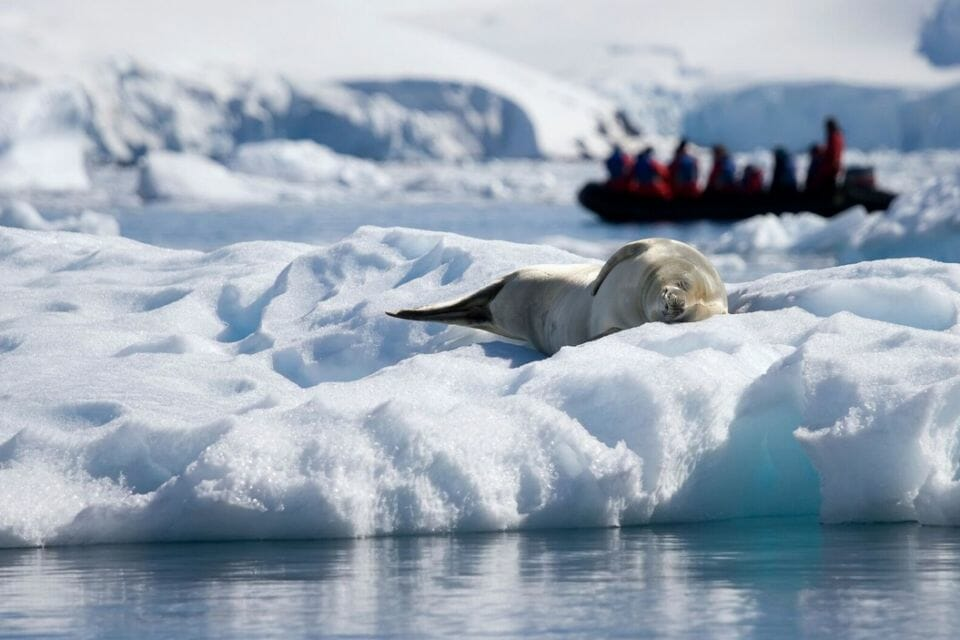 Antartica photo credit Advernture Life Travel Adventures: 7 Places to See While You Still Can - EAT LOVE SAVOR International Luxury Lifestyle Magazine