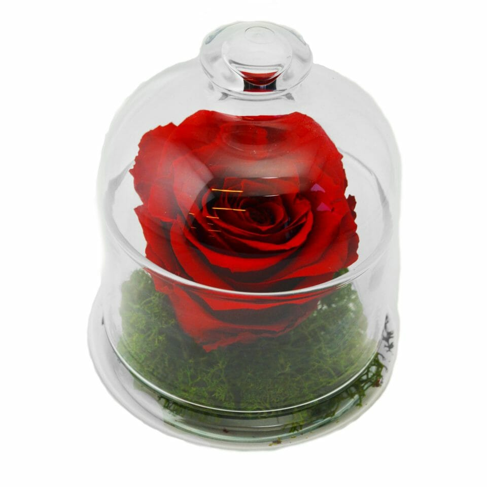 "beauty and the beast rose glass cloche Beautifully Preserved Roses from Luxe Bloom® Official Rose in ""Beauty and the Beast"" Film - EAT LOVE SAVOR International luxury lifestyle magazine and bookazines"