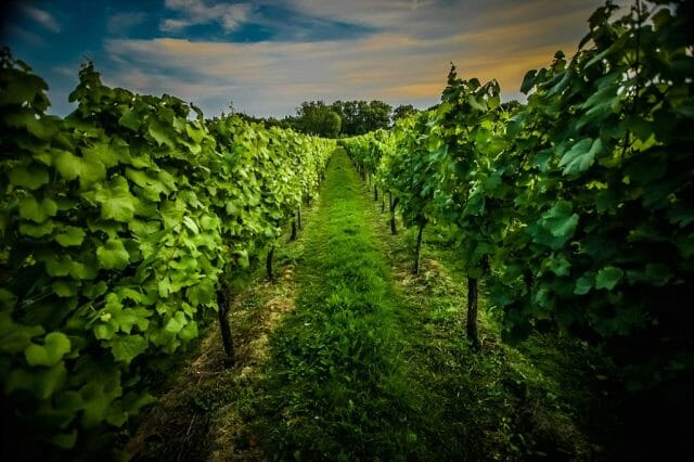 greyfriars vineyard Discover Greyfriars Vineyard and The Coral Room, Showcasing an English Only Wine List - EAT LOVE SAVOR International Luxury Lifestyle Magazine