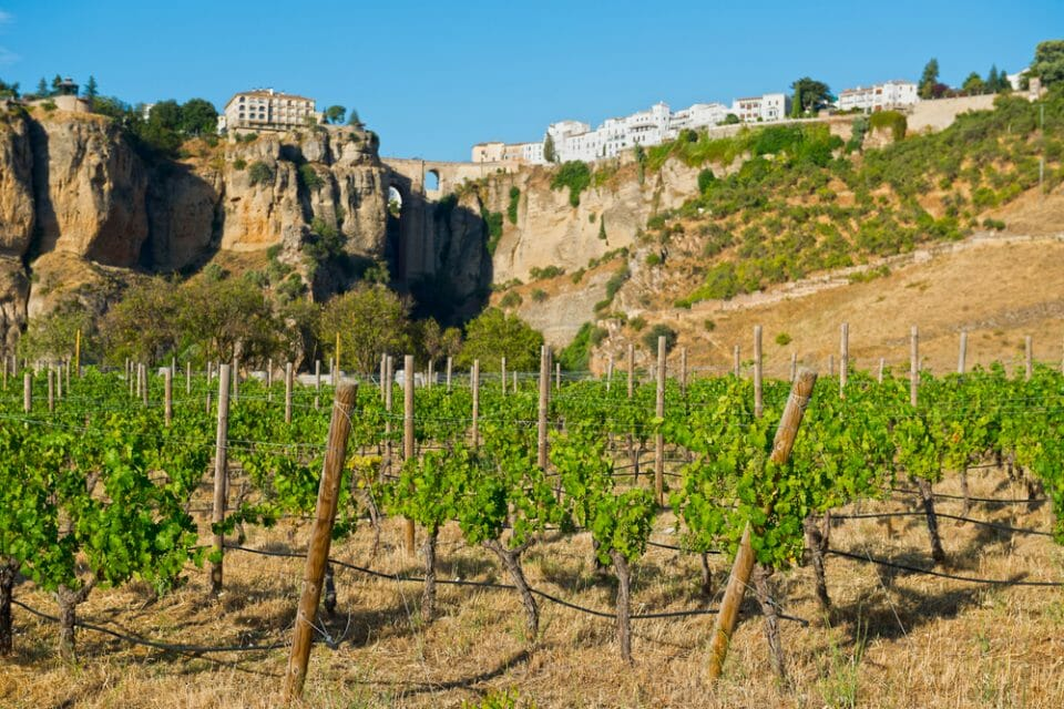 resorts in costa del sol CLC world ronda wine route Vineyards to Visit on your Costa del Sol Holiday - EAT LOVE SAVOR International luxury lifestyle magazine and bookazines