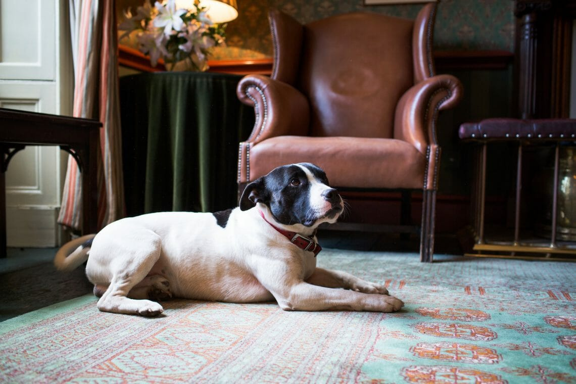 The Grange Hotel Public Areas Lounge Cozy Winter Getaway for Dogs and Owners at The Grange Hotel - EAT LOVE SAVOR International Luxury Lifestyle Magazine