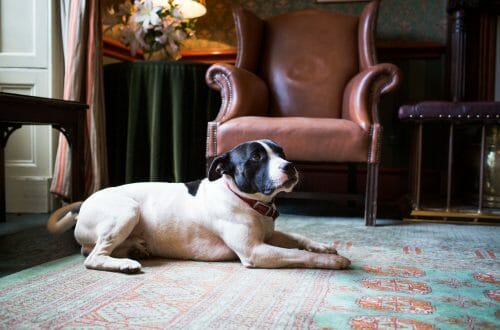 The Grange Hotel Public Areas Lounge Cozy Winter Getaway for Dogs and Owners at The Grange Hotel - EAT LOVE SAVOR International luxury lifestyle magazine, bookazines & luxury community